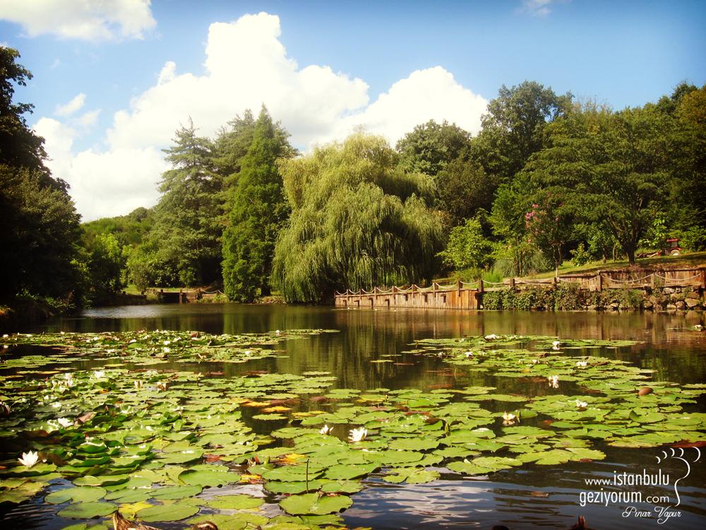 Belgrad'ta Muhteşem Bir Arboretum